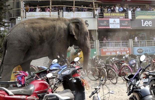 elefanta ciudad