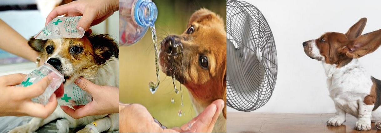 golpe de calor perros